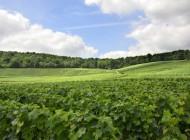 La Bourgogne et la Champagne classées au Patrimoine Mondial de l'UNESCO